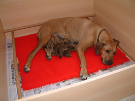 Sura with her pups